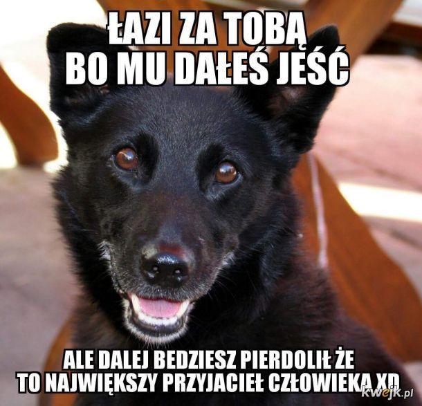Typowy pies darmozjad i szczekacz