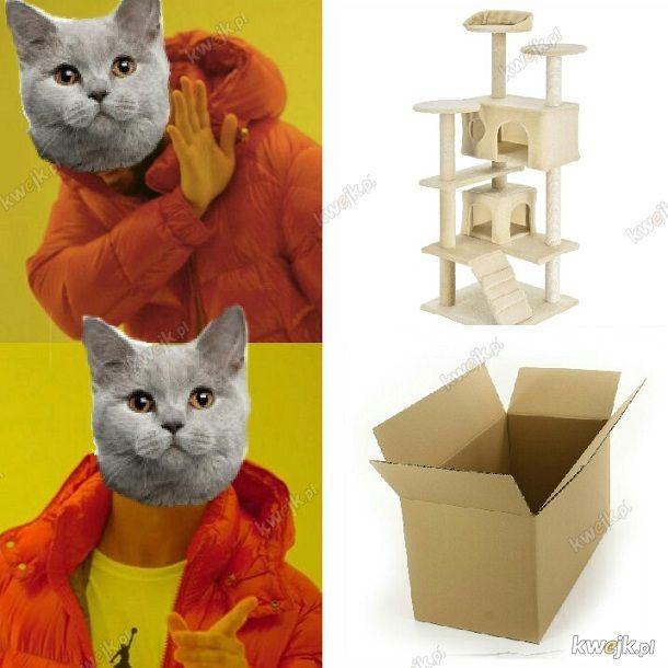 Kotów nie ogarniesz