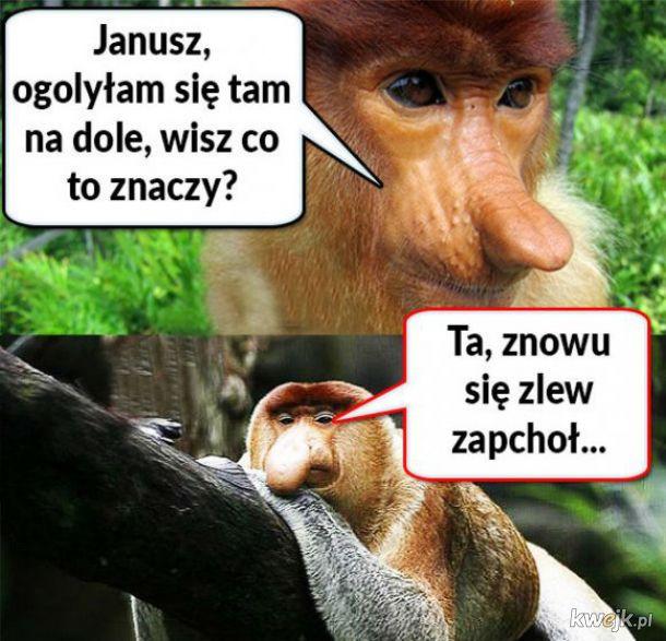 Janusz wie