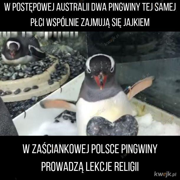 Ta Polska to jednak jest zacofana