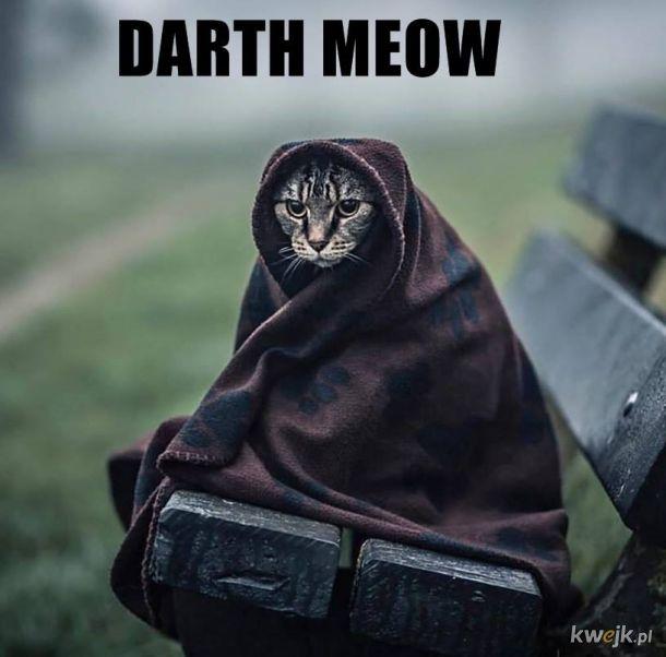 Darth Meow