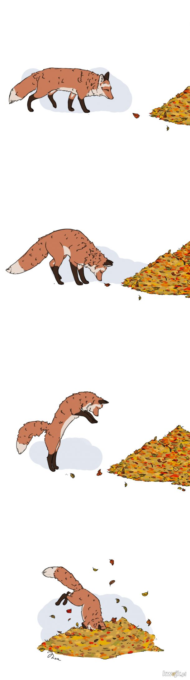 Jesienny liseł