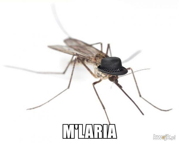 Komar geltemen
