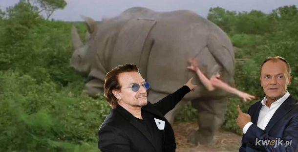 Ace Ventura, Bono i Tusk
