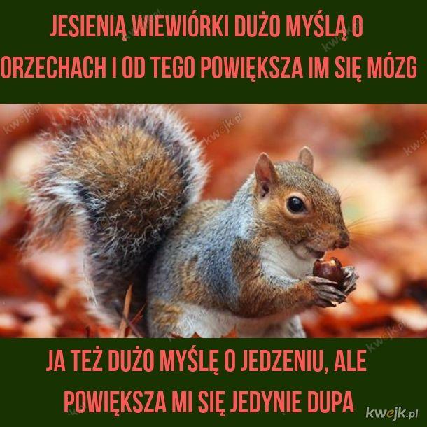 Wiewiórki mają lepiej