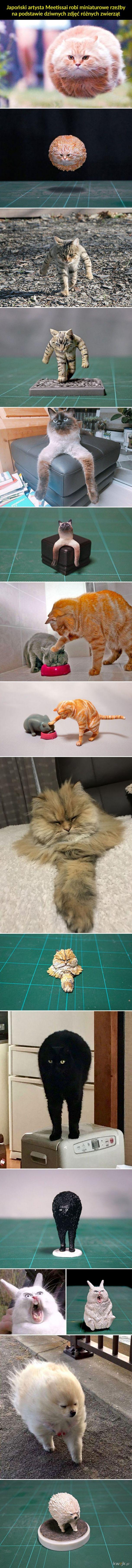 Rzeźby z dziwnych zdjeć zwierząt