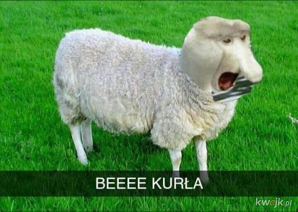 Dziwna owca