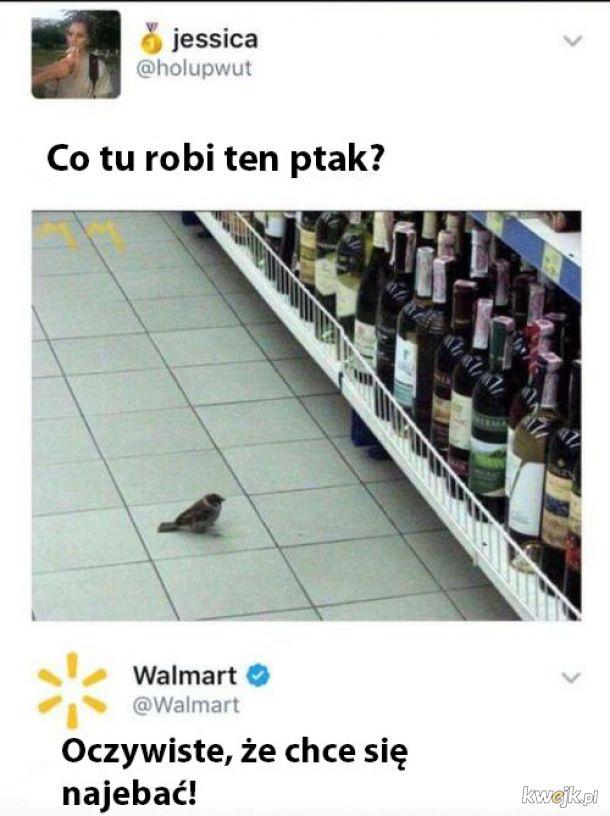 Co tu robi ptak