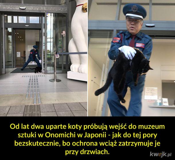 O dwóch kotach, które od lat próbują dostać się do muzeum w Japonii