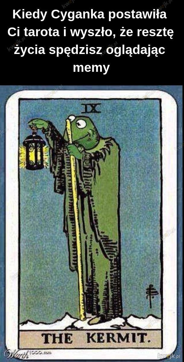Kermit oznacza śmierć dla społeczeństwa