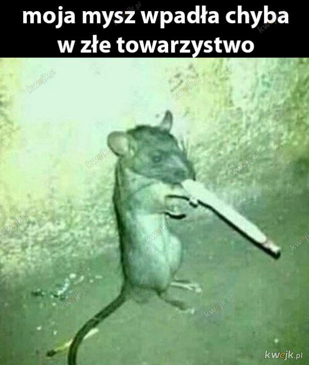 Myszko wróć na dobrą drogę