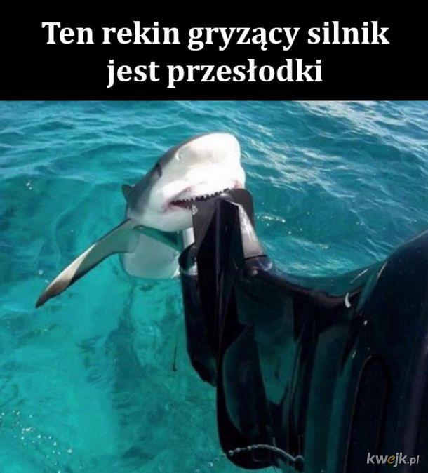 Słodki rekin
