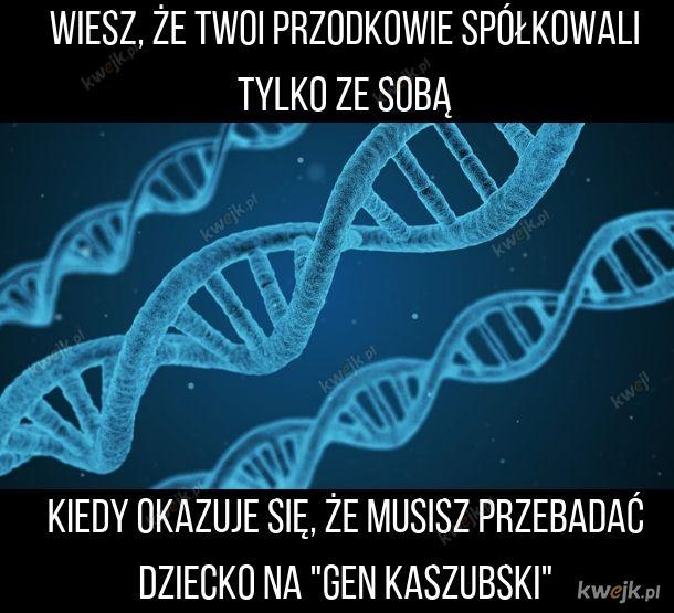 Gen Kaszubski