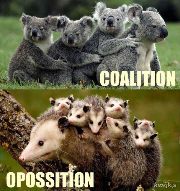Koalicja vs Oposycja