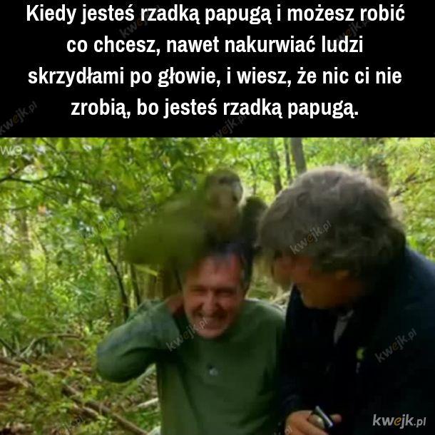 Rzadka papuga