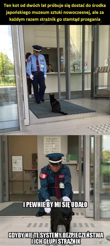 Kot znowu powstrzymany