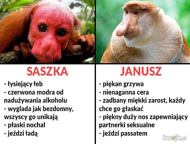 Saszka vs Janusz