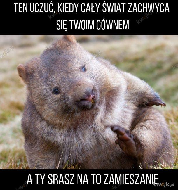 Wombaty robią kwadratowe kupki