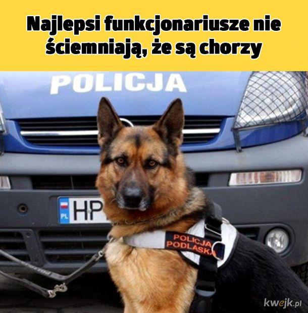 Najlepszy policjant