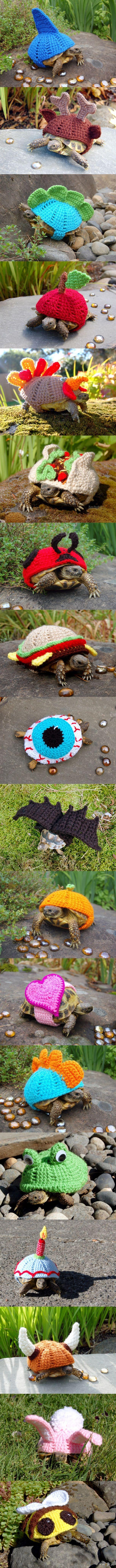 Żółwie ubranko na zimne dni
