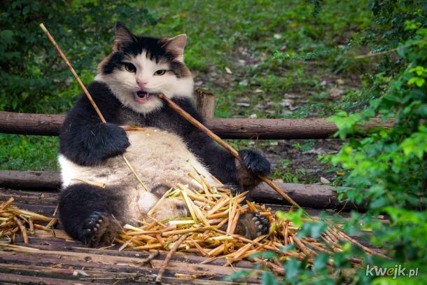 Sfotoszopowane koty to najlepsze, co dziś zobaczysz