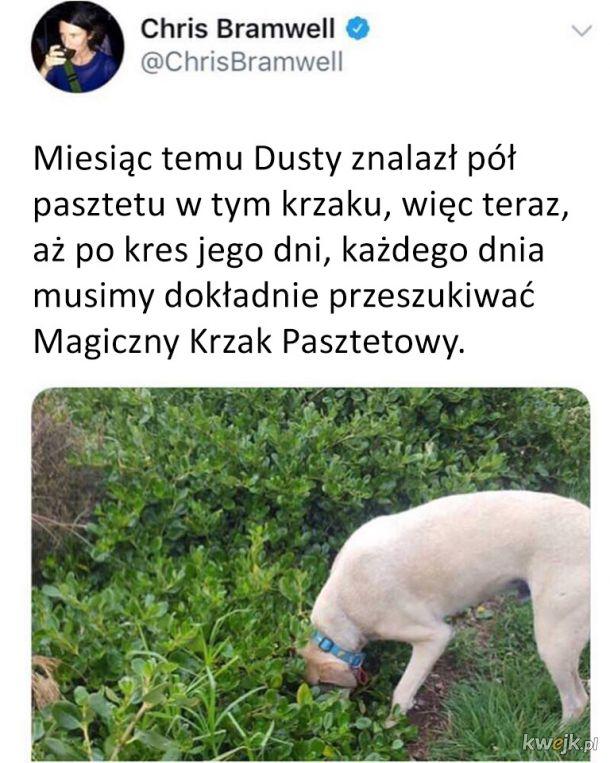 Magiczny Krzak