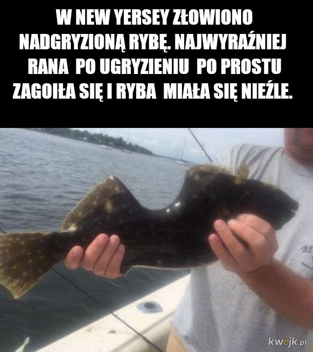 rybka lubi plywac
