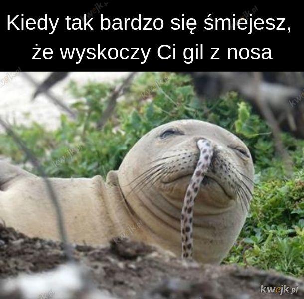 Foczka