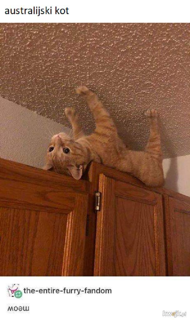 Odwrócony koteł
