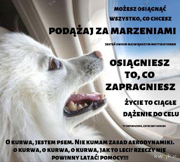 Pies-motywacyjny