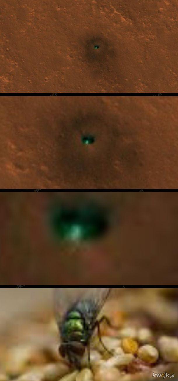 Zielona mucha na Marsie