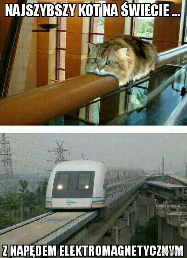 Kot antygrawitacyjny