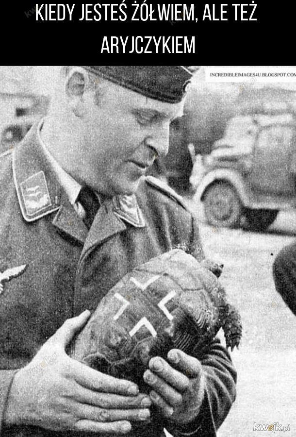 Żółw Adolf