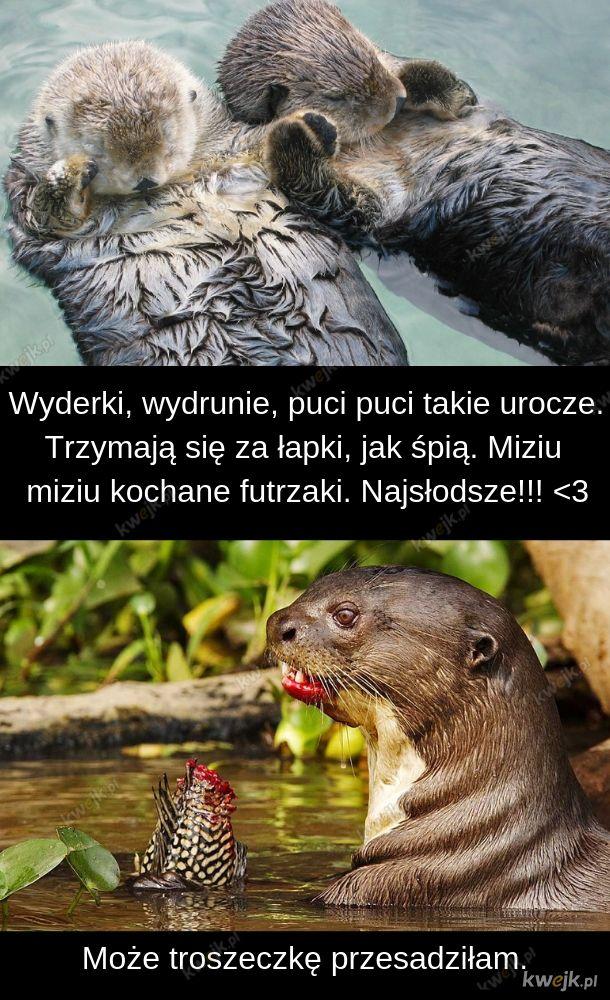 Okazuje się, że wydry nie żywią się całuskami i przytulaskami