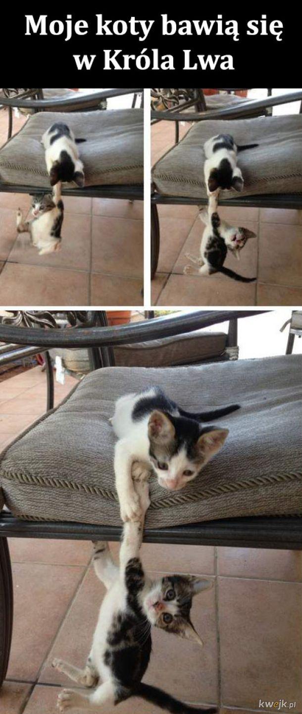 Zabawa kotków