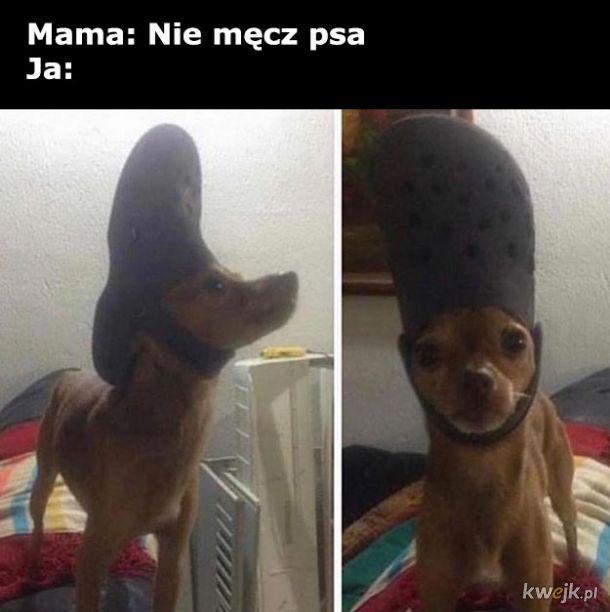 Nie męcz psa