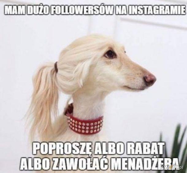 Mam dużo followersów