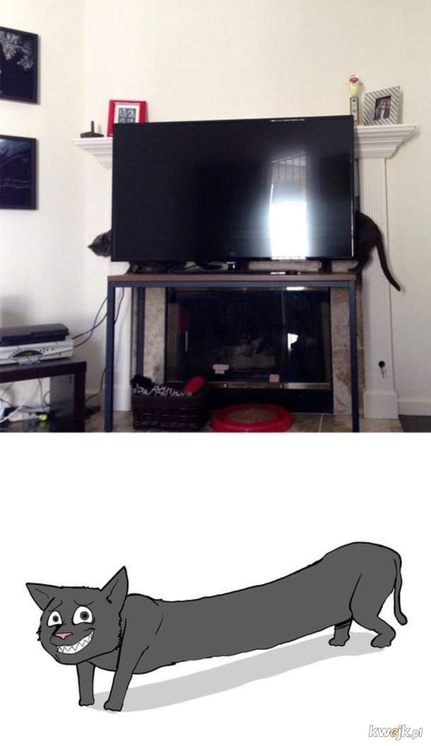 Jaki długi koteł