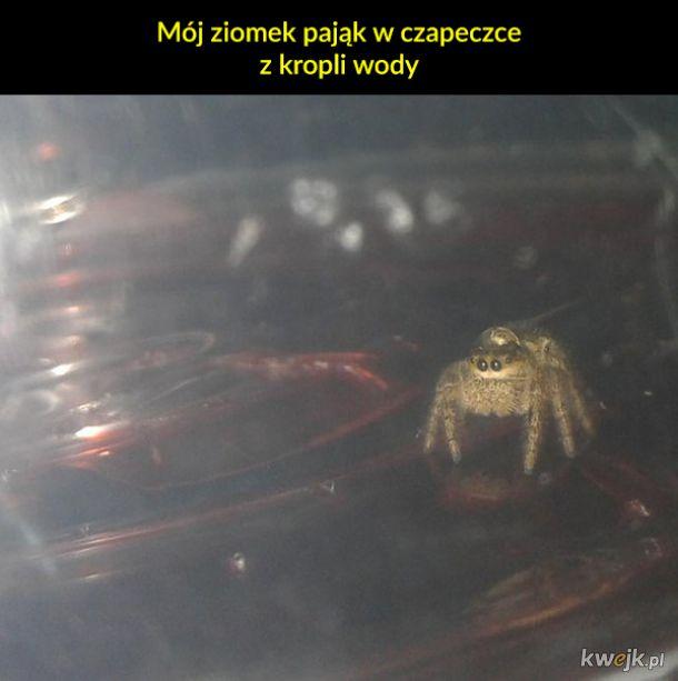 Nie takie pająki straszne, jak je malują