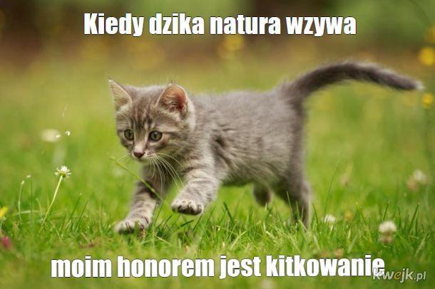 Kitkowanie
