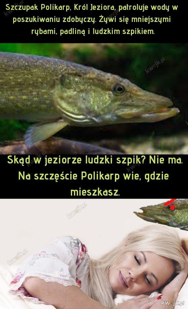 Szczupak Polikarp