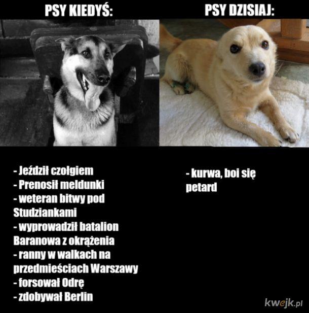 Psy kiedyś i dzisiaj