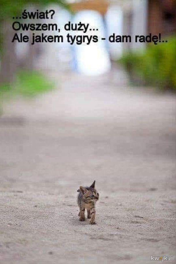 Jakem tygrys!