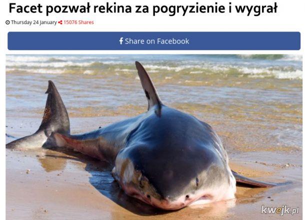Pozwał rekina