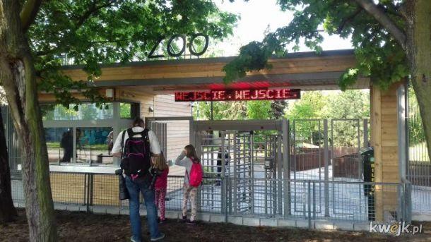 Ciekawe ile plusow zbierze wejscie do zoo
