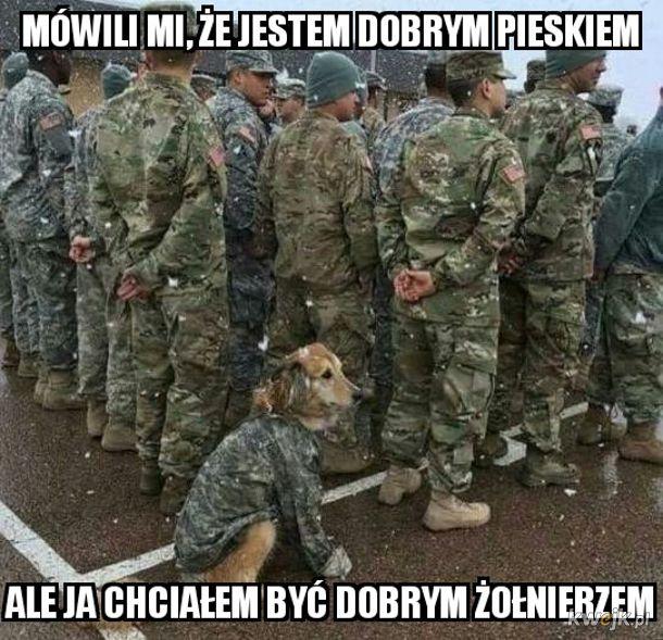 Pieseł żołnierzeł