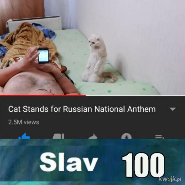 Rosyjski kotek