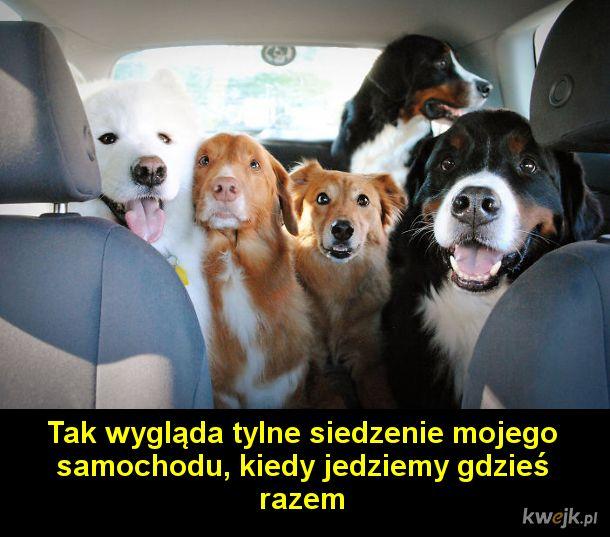 Jak wygląda życie, kiedy masz dużo psów