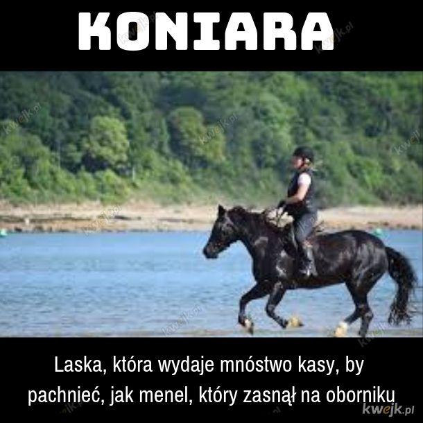 Koniara