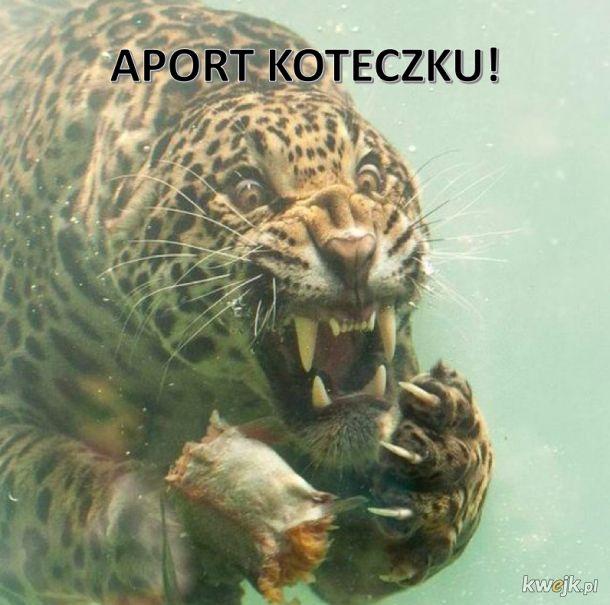 nikt mu nie powiedział, że koty nie aportują